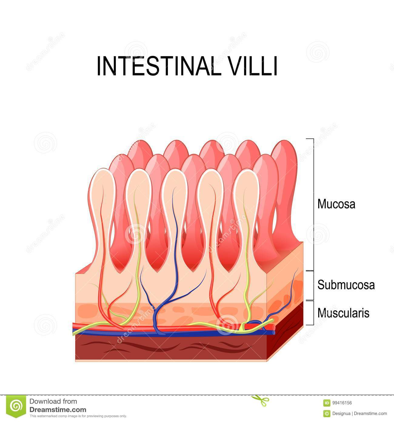 Intestinal Epithelial Cell Royalty