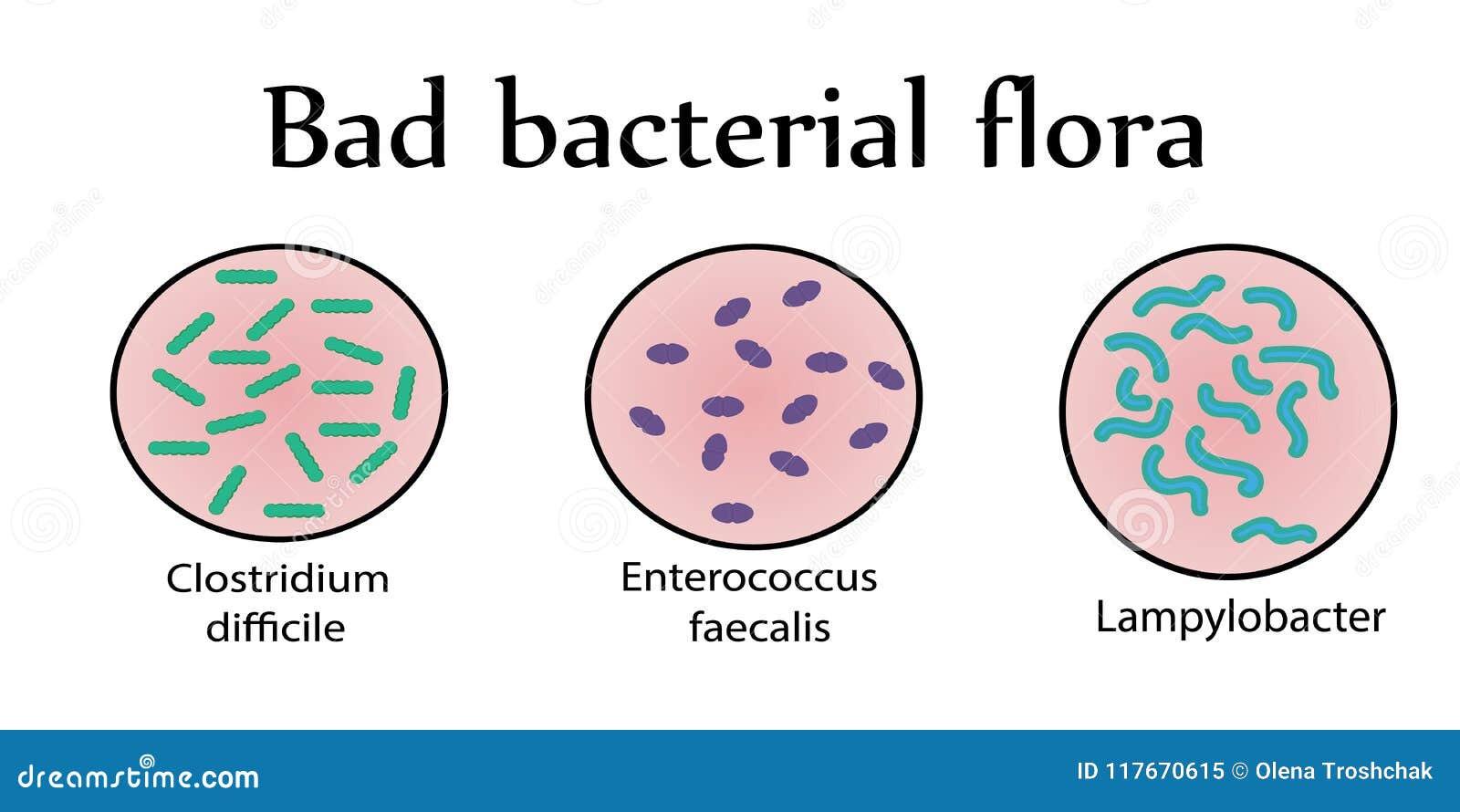 Intestinale bacteriële flora Slechte bacteriën