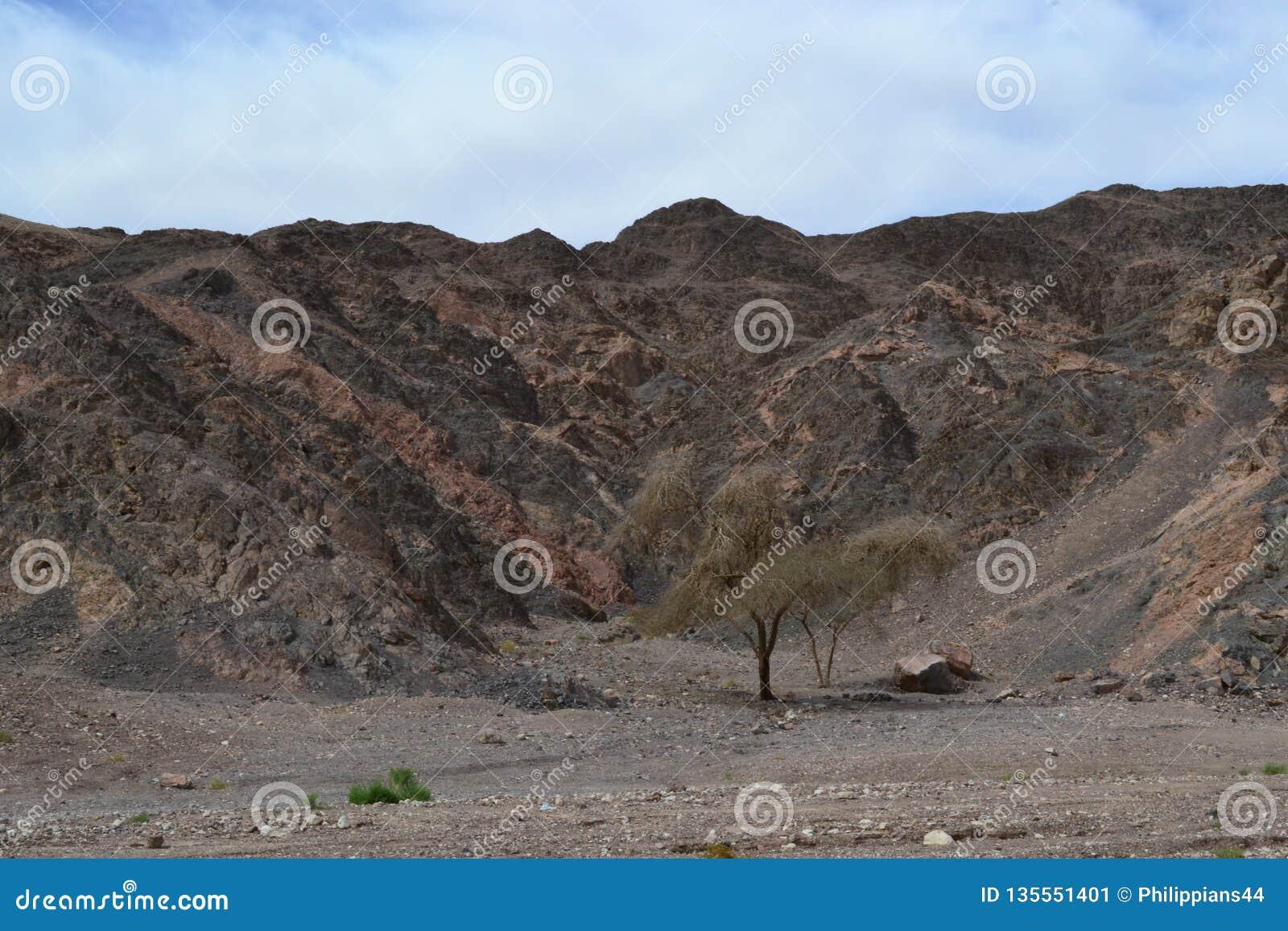 Intressera vagga bildande i Timna parkerar, den Negev öknen, vildmark i södra Israel, Eilat