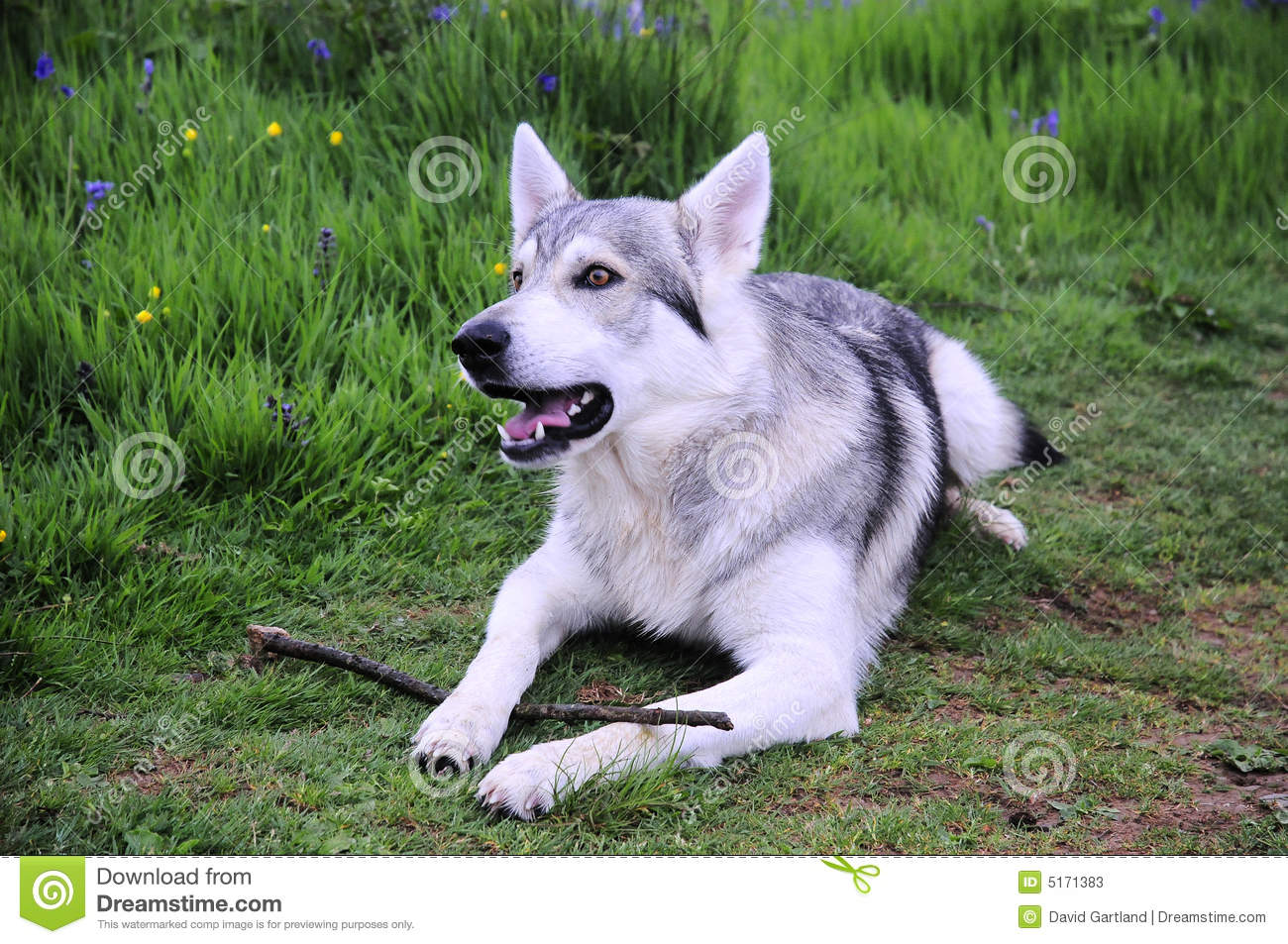 White Northern Inuit