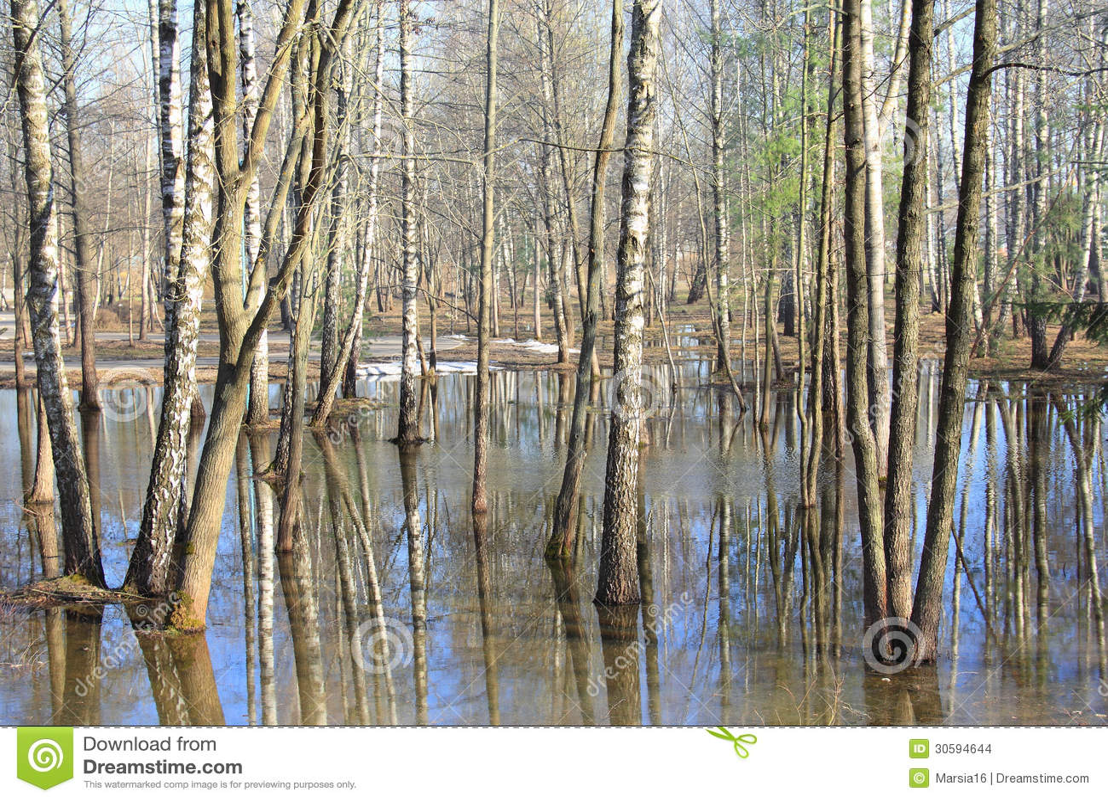 Inundación de la primavera en el bosque