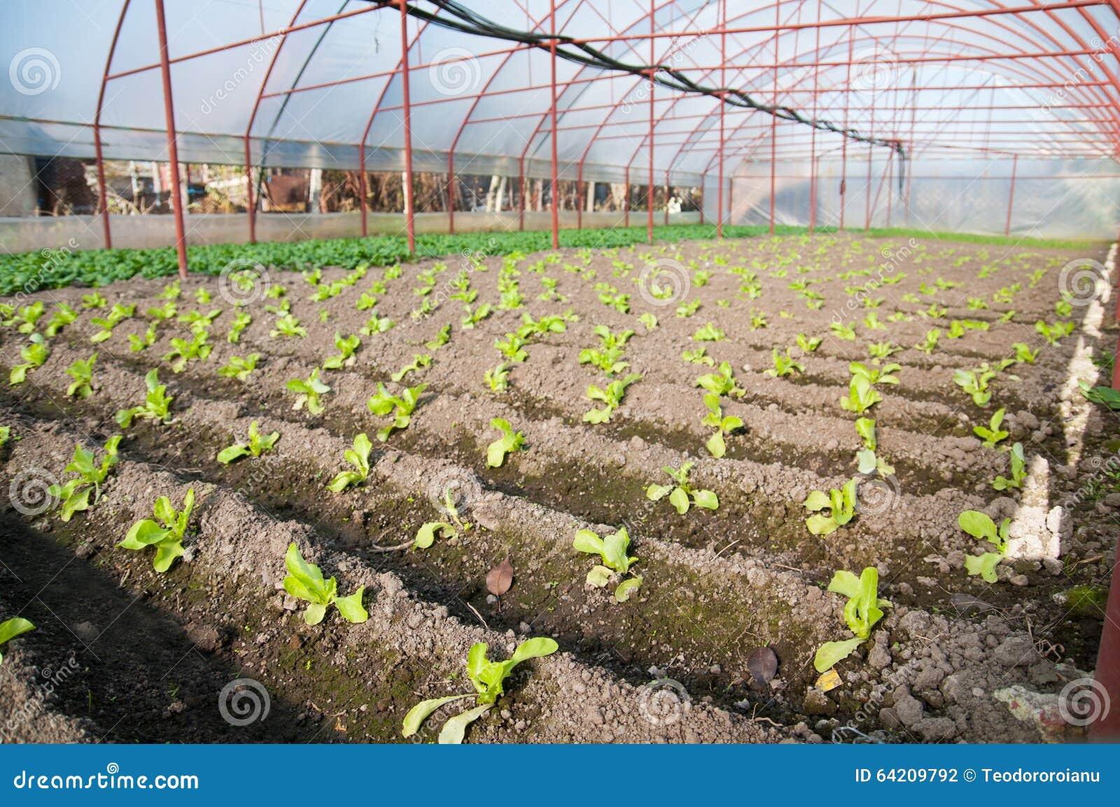 Invernadero agrícola