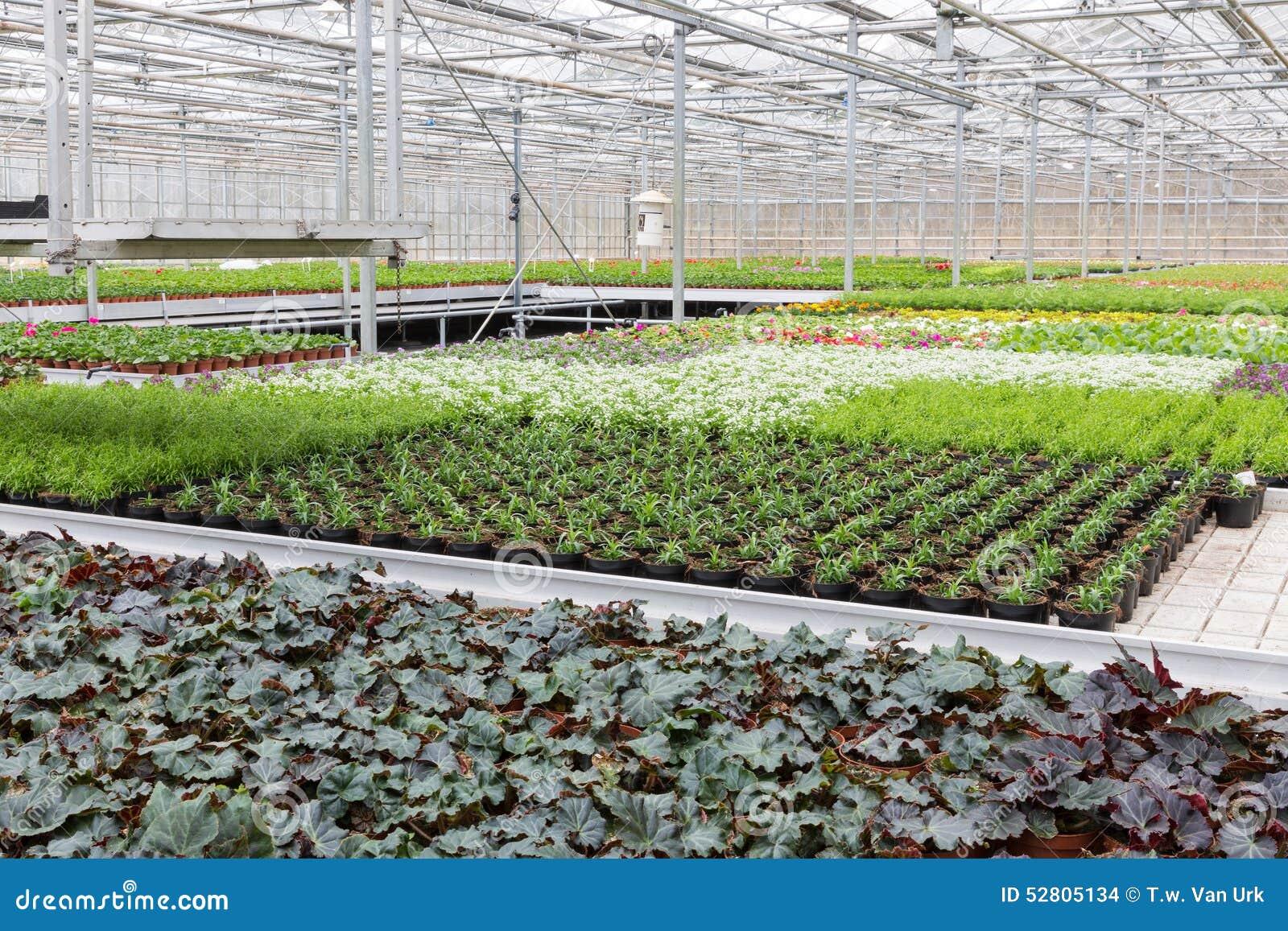 Invernadero con el cultivo de varias plantas y flores foto for Plantas para invernadero