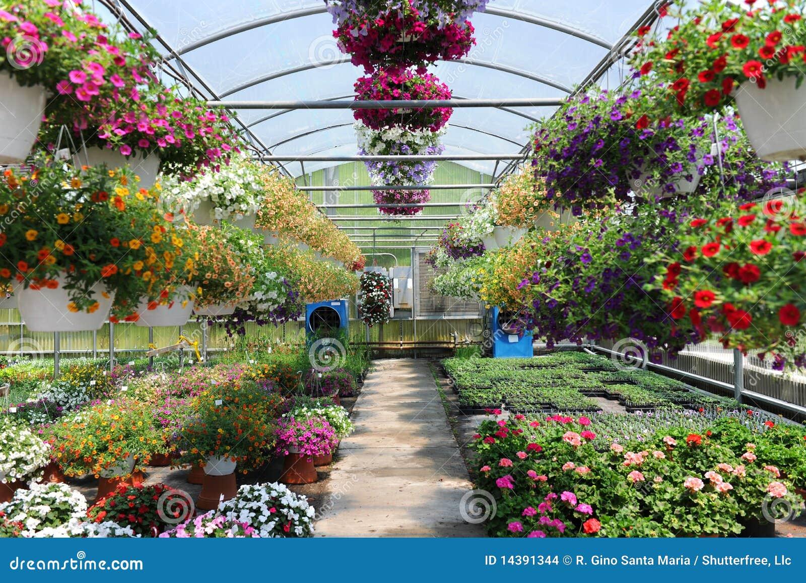 Invernadero con las flores imagenes de archivo imagen for Plantas para invernadero