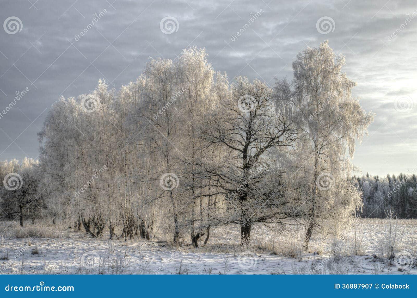 Download Inverno immagine stock. Immagine di freeze, nubi, betulla - 36887907