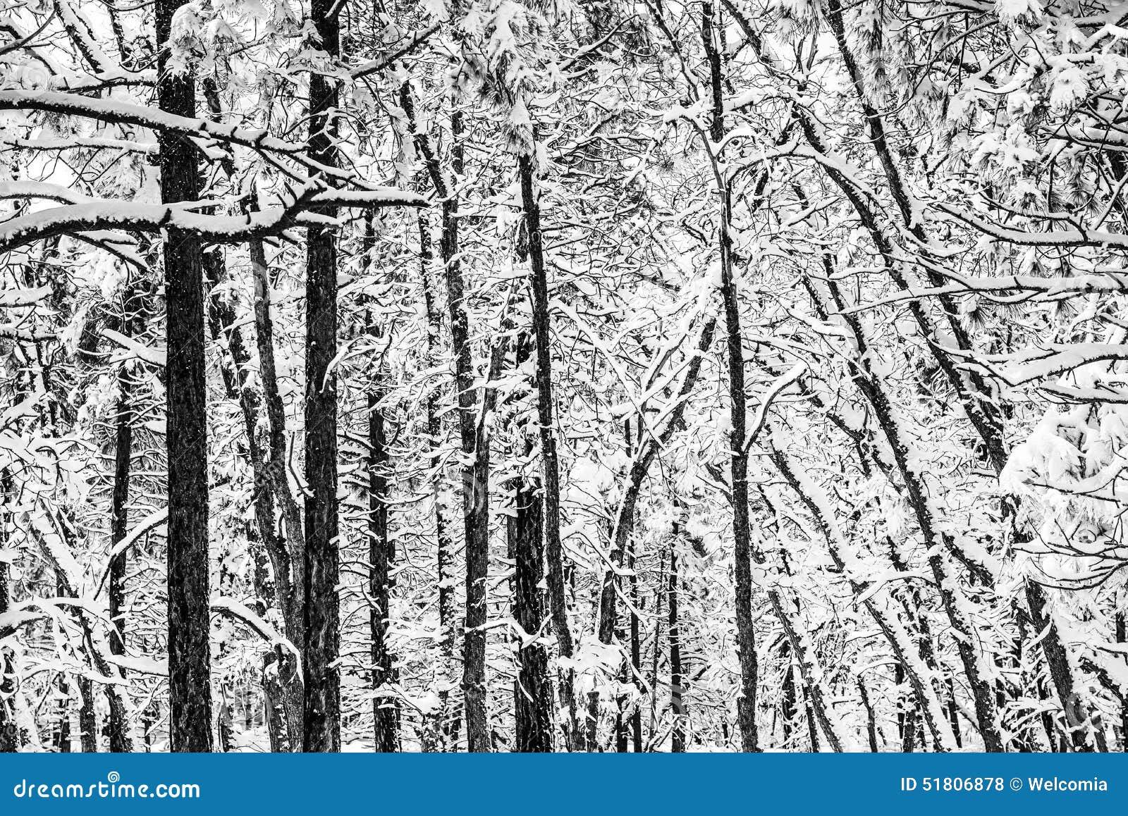 Inverno cênico Forest Pattern