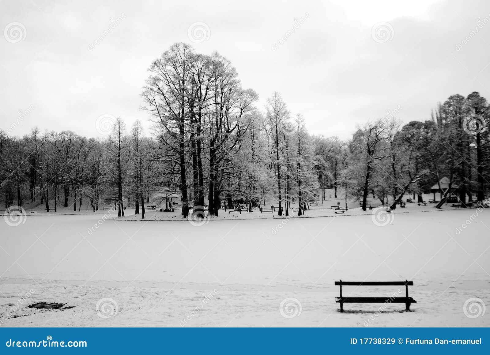 Inverno della foresta