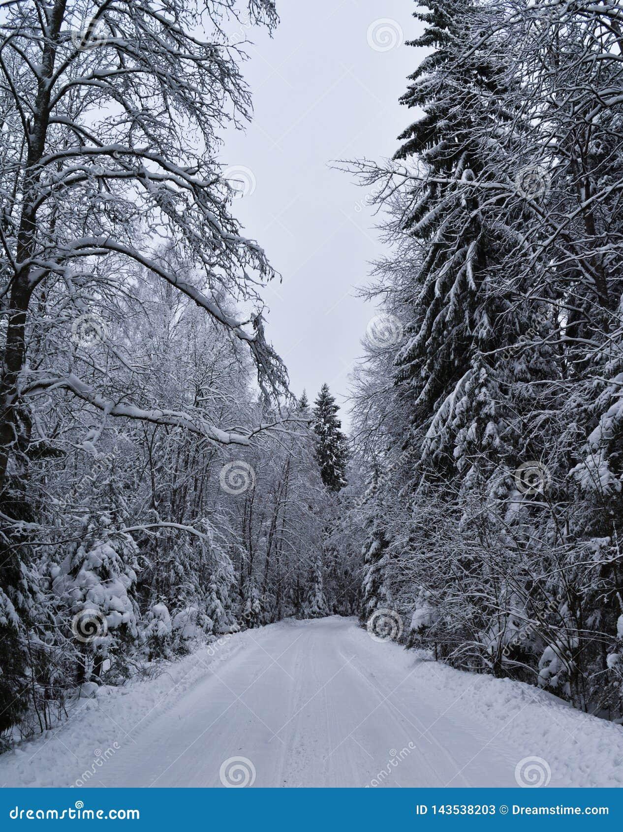 Inverno dello Snowy nella foresta