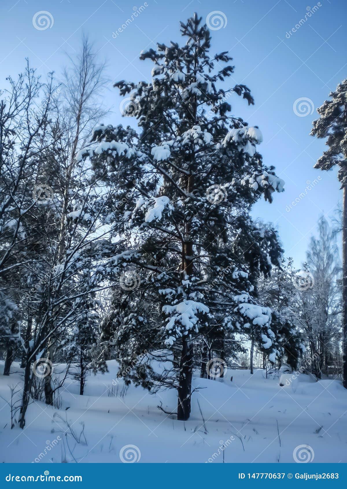 Inverno, ensolarado, neve, sincelos, linha