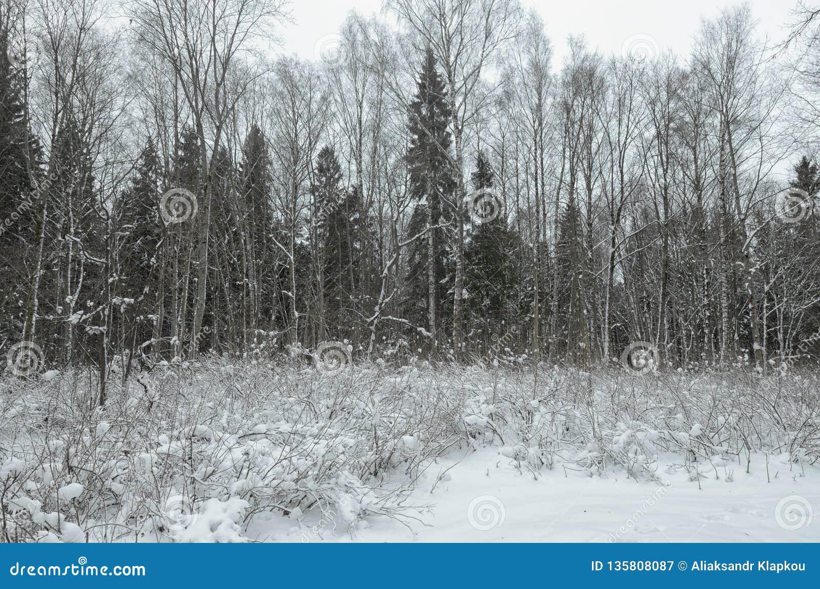 Inverno frio nas madeiras
