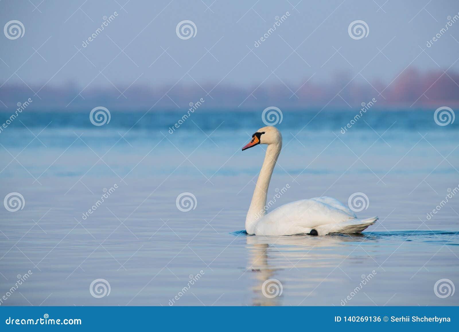 Inverno LIFE-Nature selvaggio del lago di due cigni