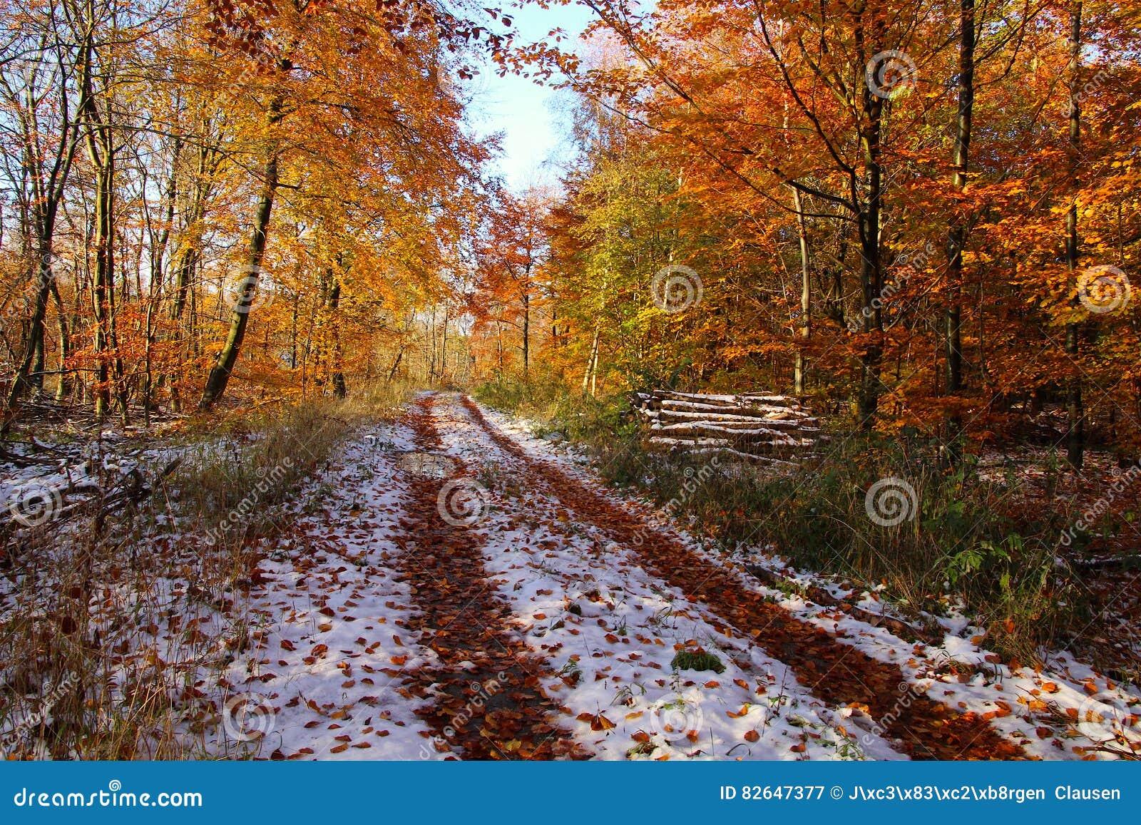 Inverno na estrada na floresta