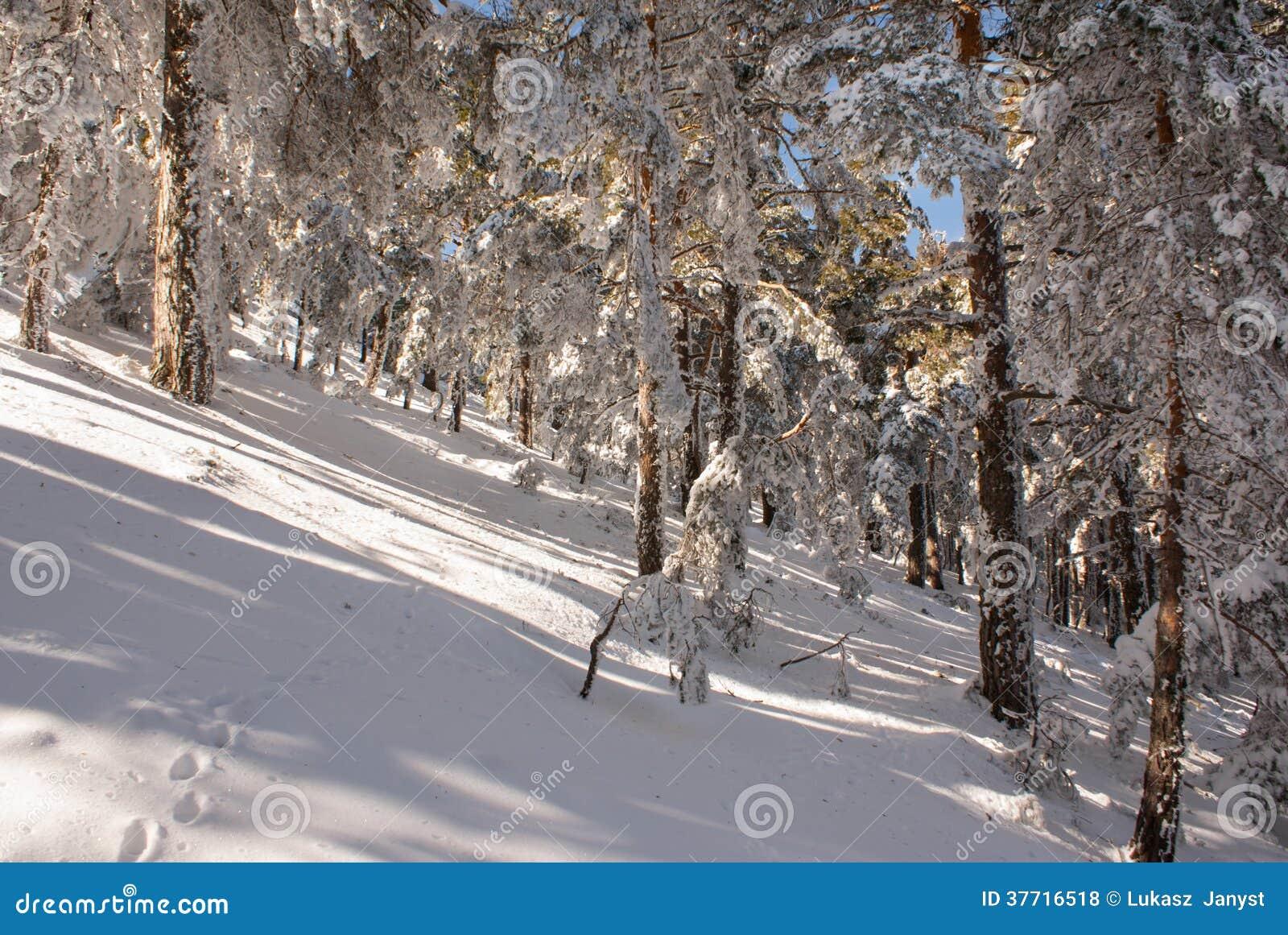 Navacerrada Spain  city photos gallery : Inverno Na Montanha Navacerrada Madrid, Spain Fotos de Stock Royalty ...