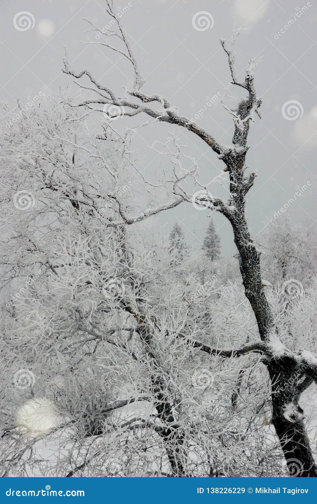 Inverno nas montanhas de Ural