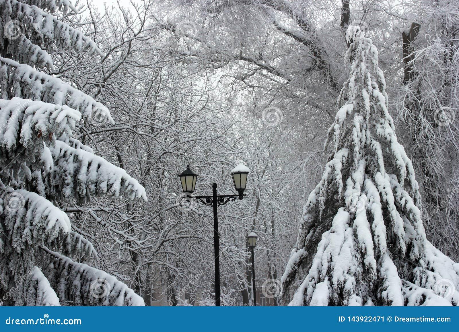 Inverno, neve, natura, paesaggio, parco, luci, bianco, nere