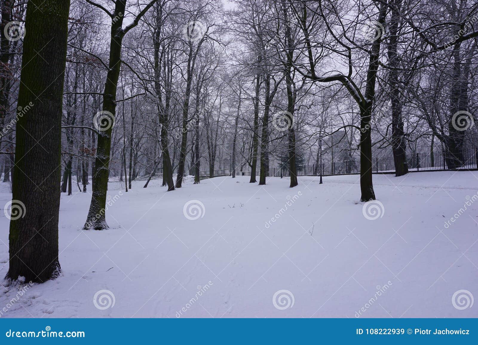 Inverno no parque 12
