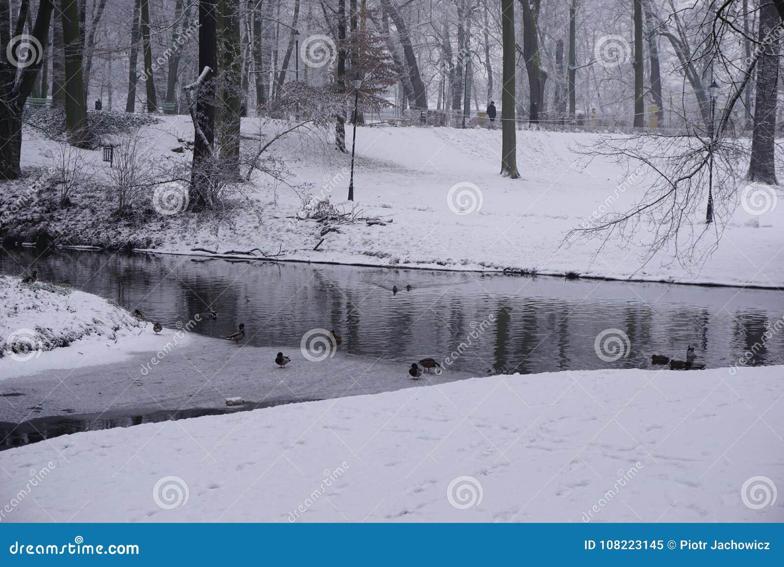 Inverno no parque 6
