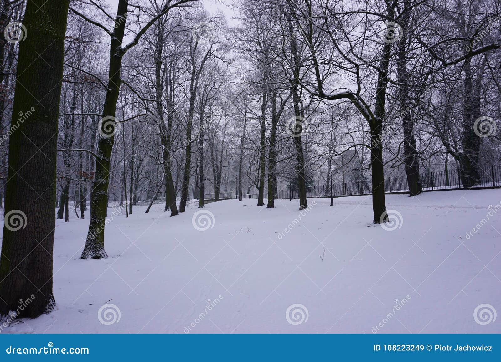 Inverno no parque 8