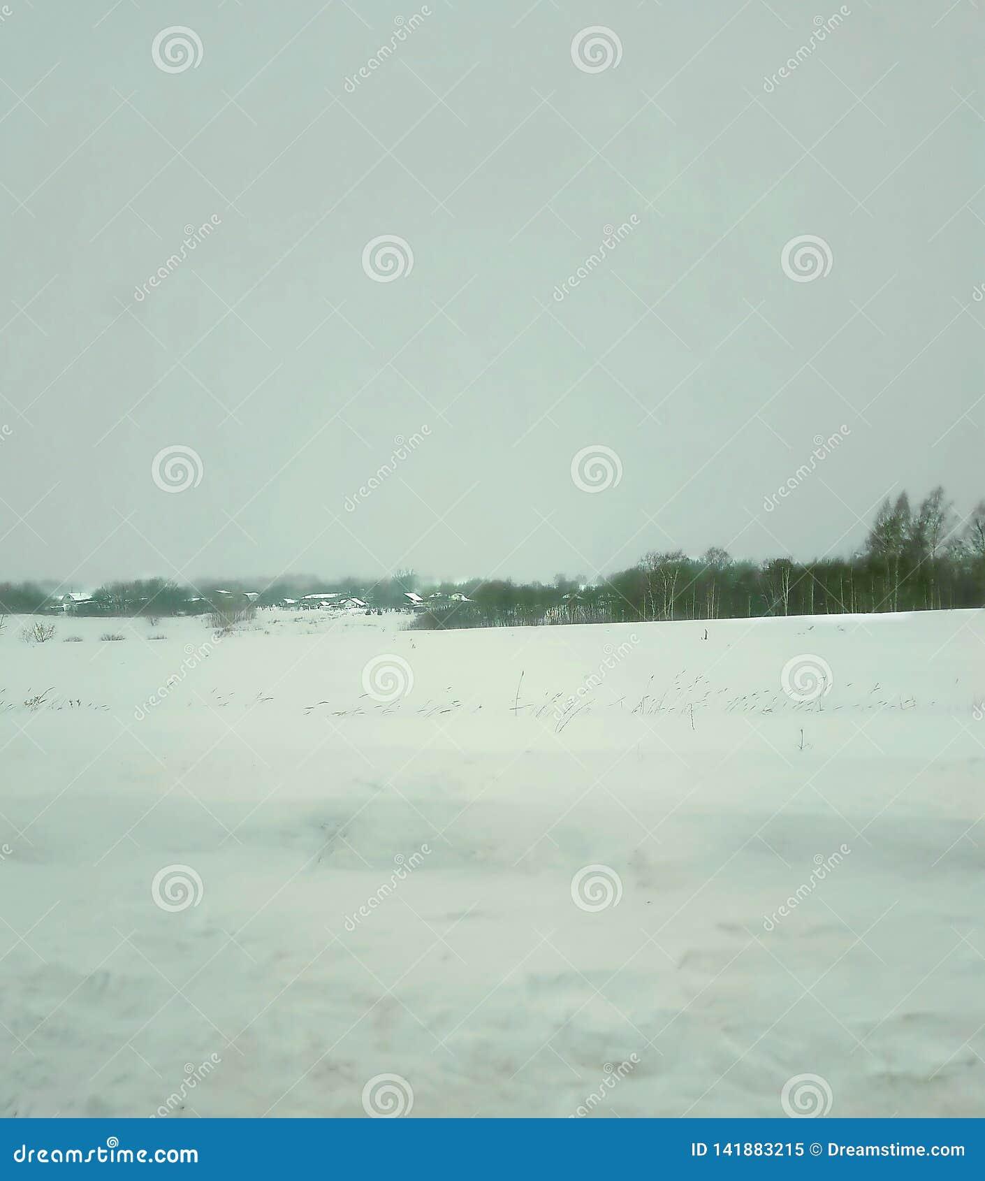 Inverno, paesaggio, neve, albero, foresta, cielo, natura, orizzonte, giorno, ghiaccio, freddo, gelo