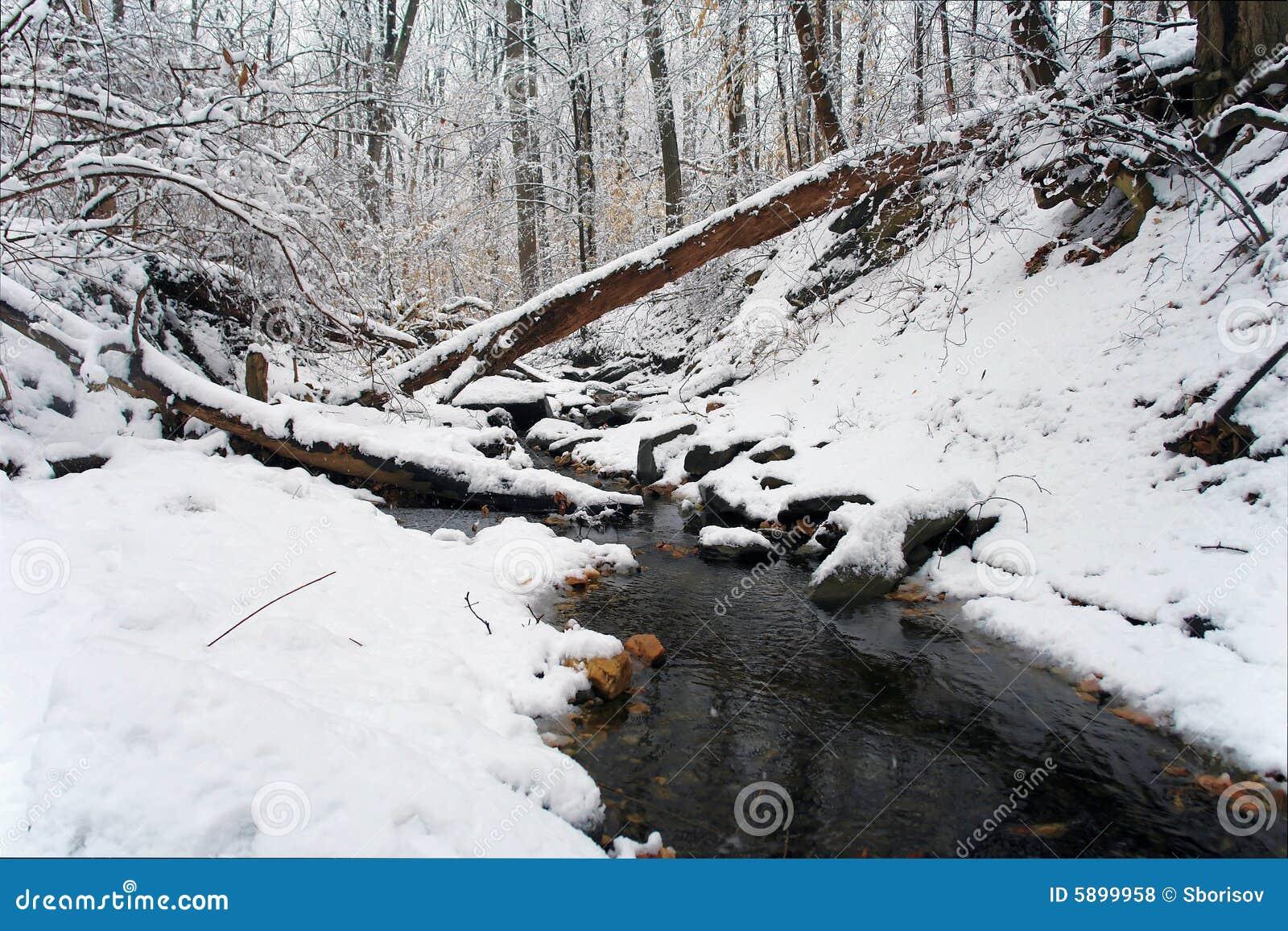 Inverno in Washington DC: Sosta del Rock Creek