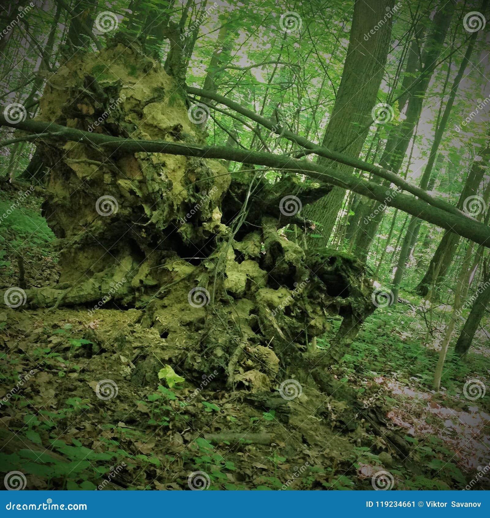 Inverterade gamla stubben för jord högen av en bisarr form är mycket liknande till en spöke, monstret, elaka trollet, ensemble, o