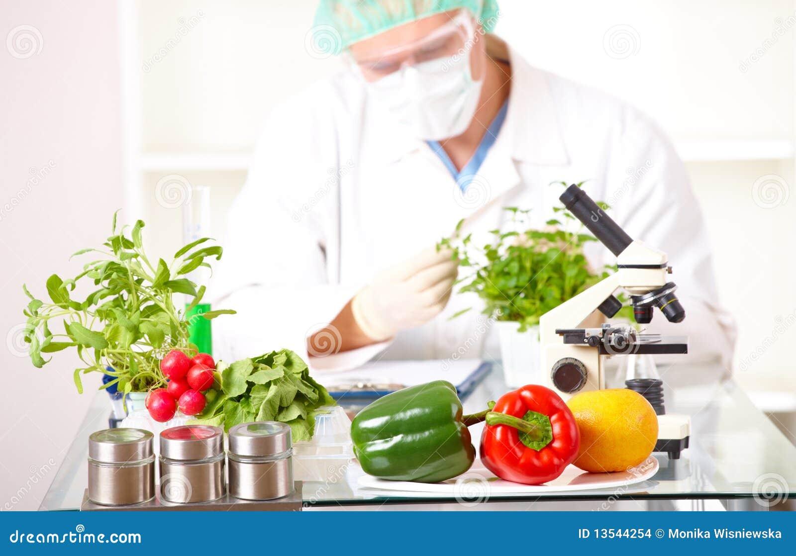 Investigador com as plantas do GMO no laboratório