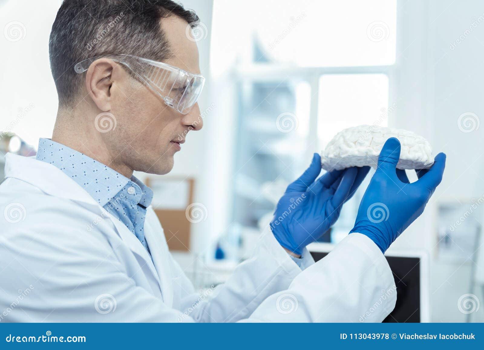 Investigador profesional que lleva a cabo un modelo del cerebro