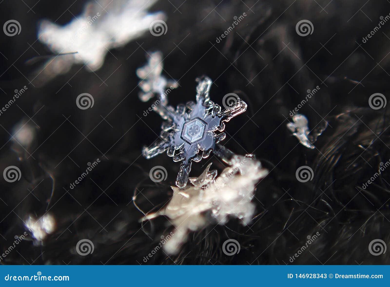 Invierno Copos de nieve - hielo hermoso del cord?n