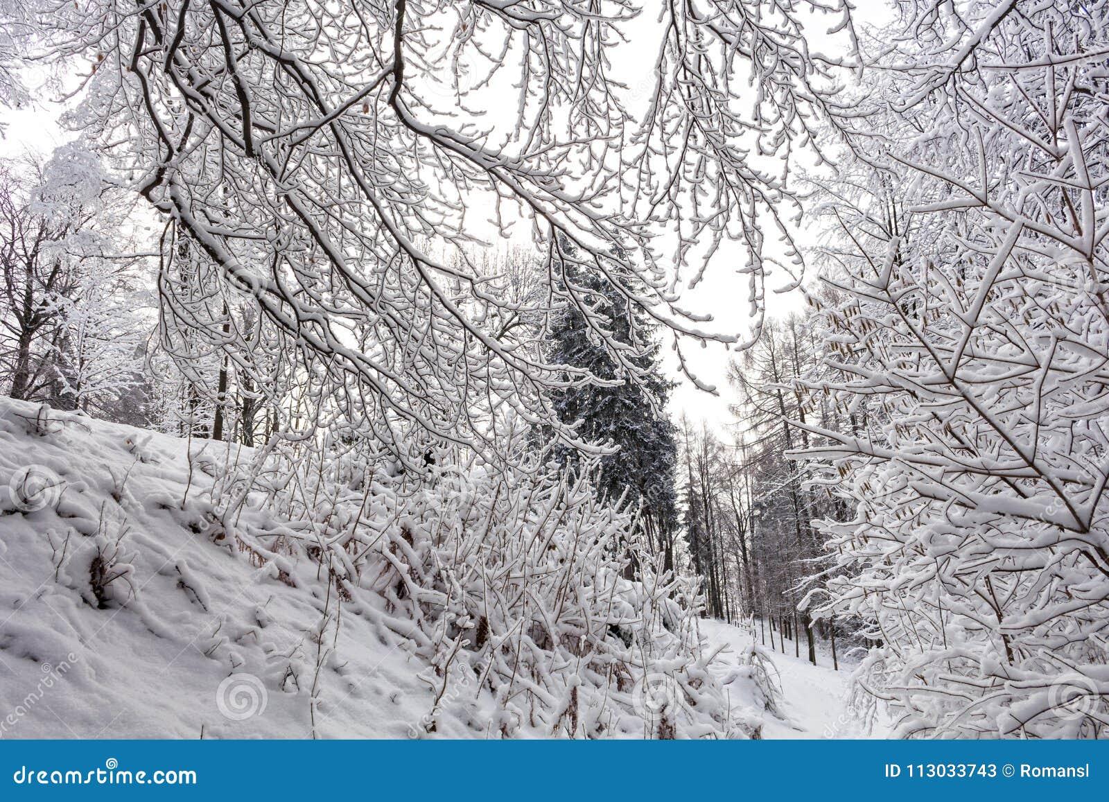Invierno en el parque