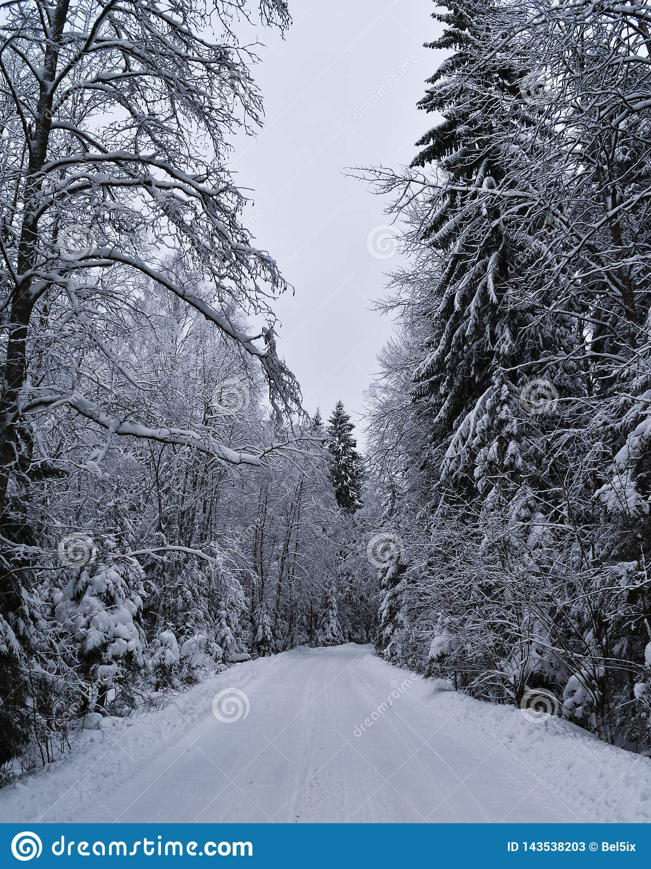 Invierno Nevado en el bosque