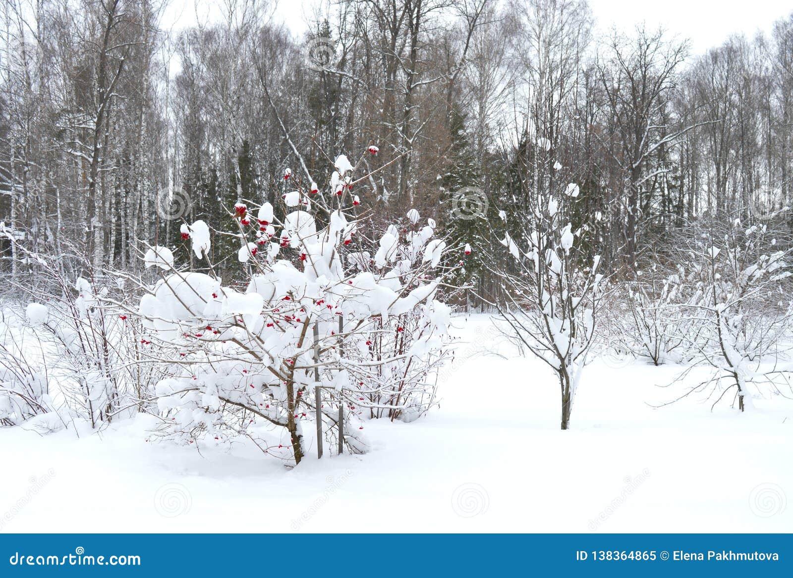 Invierno, nieve, árbol, paisaje, frío, bosque, naturaleza, blanco, cielo, helada, árboles, azul, escena, hielo, congelado, estaci