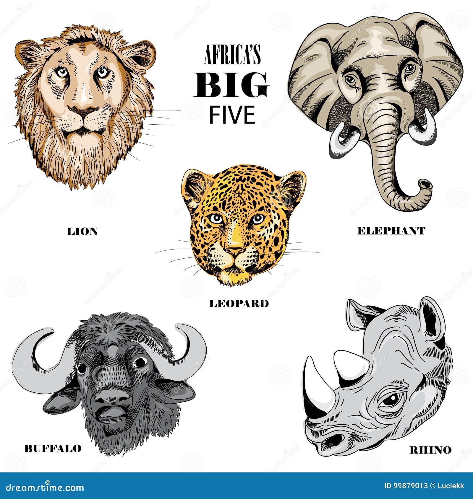 inzameling dieren afrika s grote vijf vector