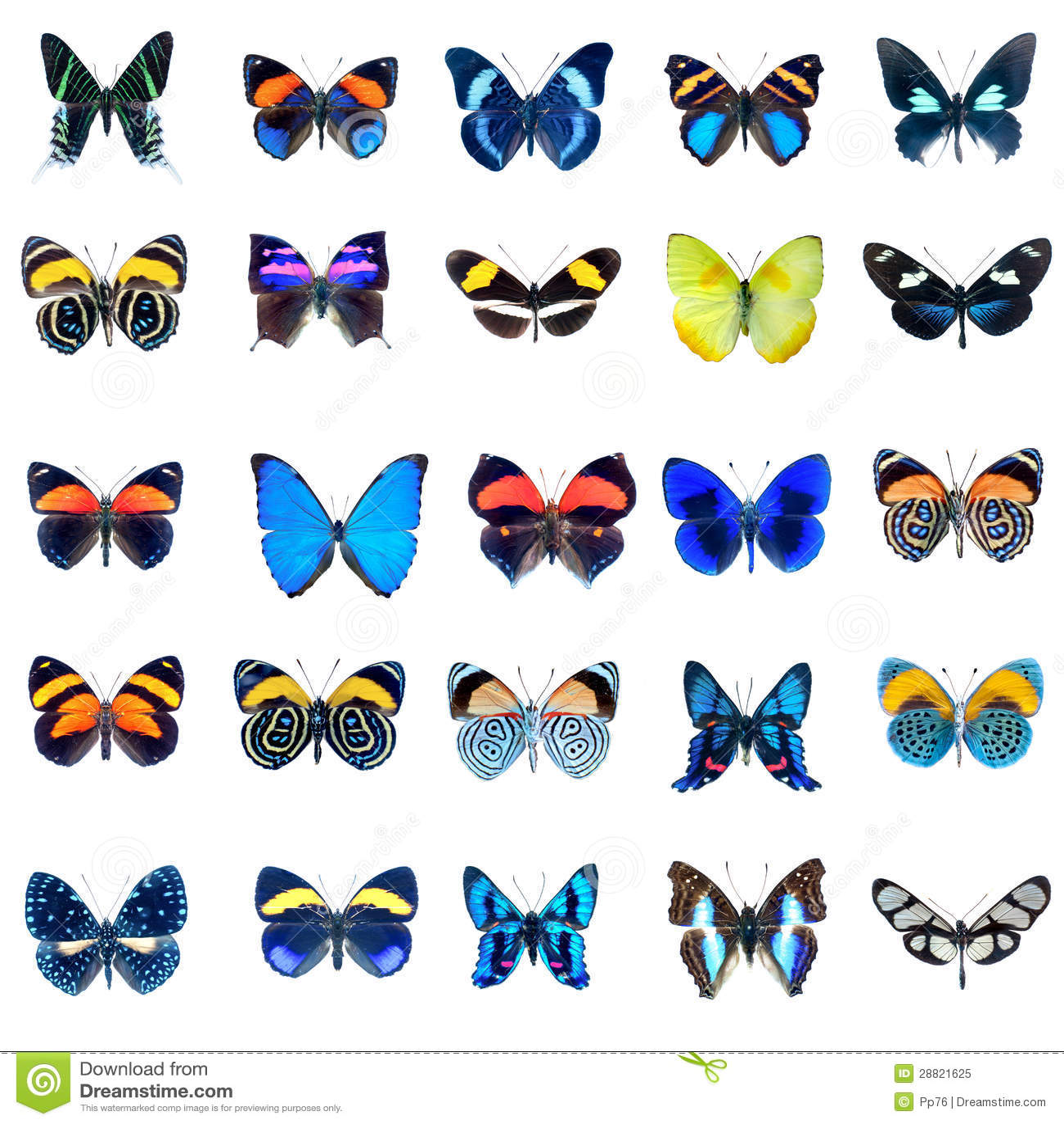 Inzameling van Vlinders op een witte achtergrond