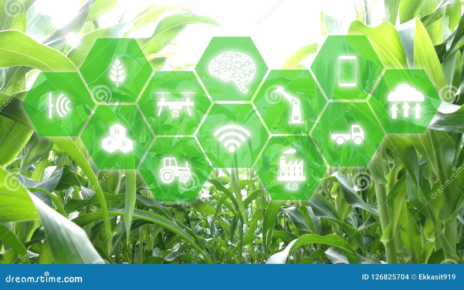 Iot,事互联网,农业概念,管理的,控制, monitorin聪明的机器人人工智能ai用途