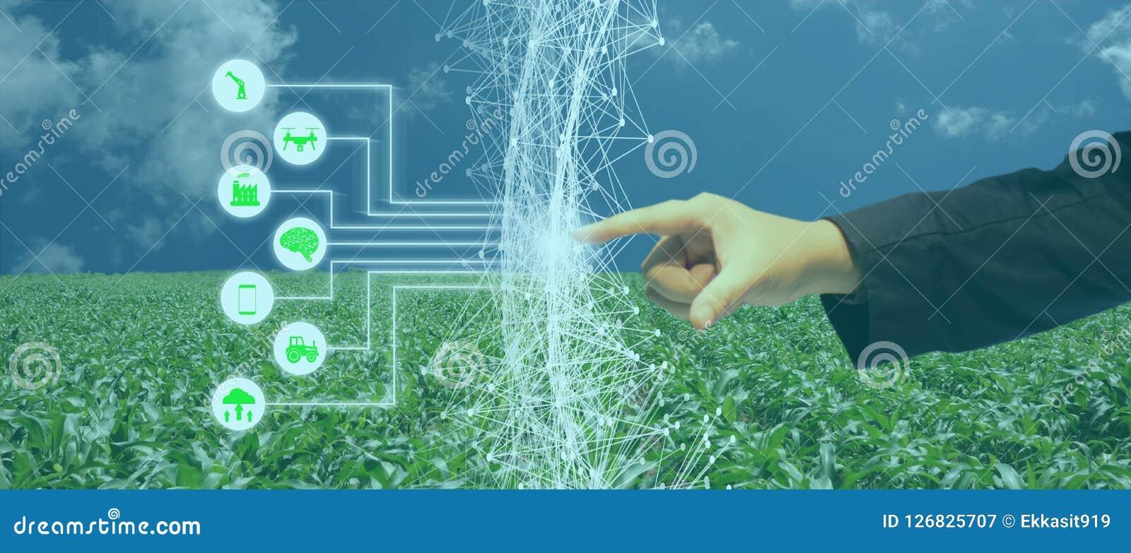 Iot, Internet das coisas, conceito da agricultura, uso robótico esperto do ai da inteligência artificial para a gestão, controle,