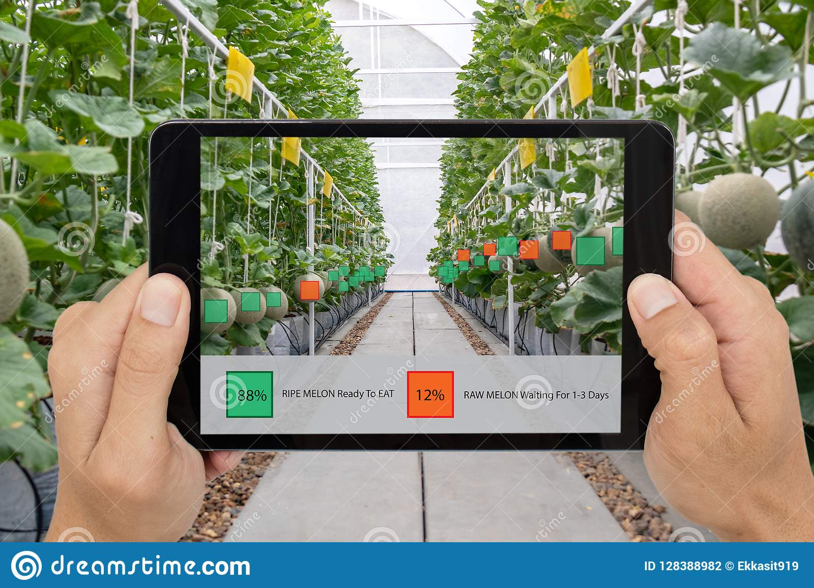 Iot smart farming, agriculture industry 4.0 technology concept, farmer hold the tablet to use augmented mixed virtual reality soft
