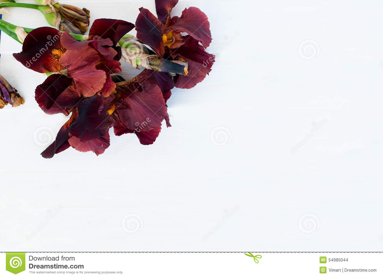 Irins blommar på en rosa bakgrund