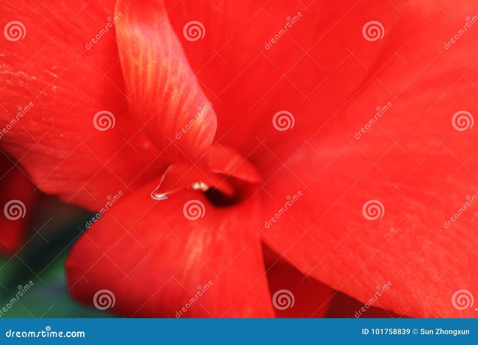 Iris stock image. Image of death, blue, called, metaphor - 101758839