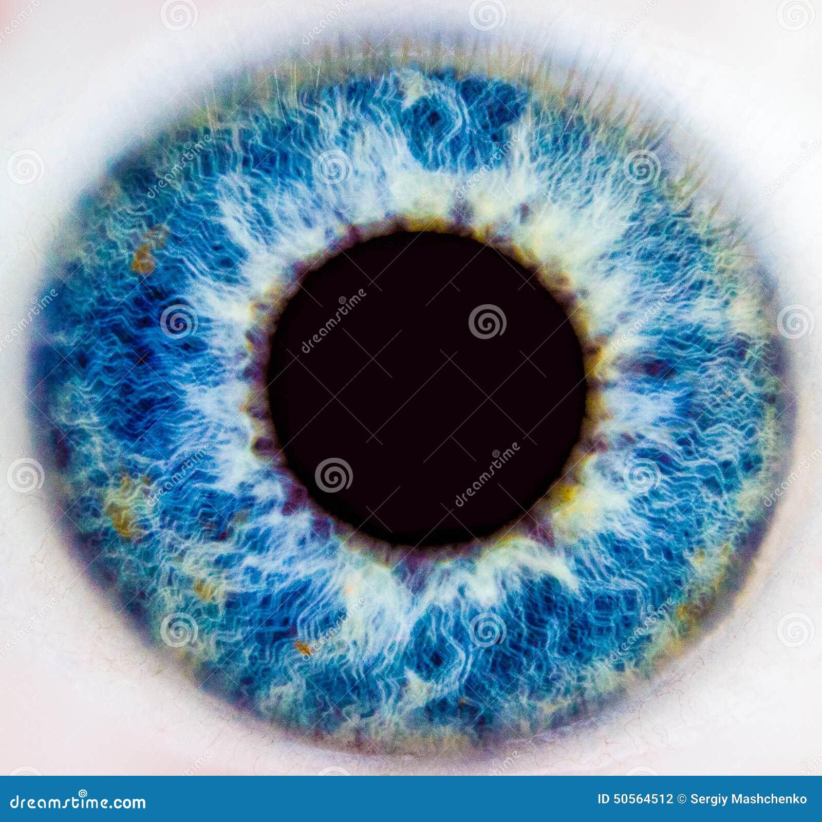 Iris de un ojo humano