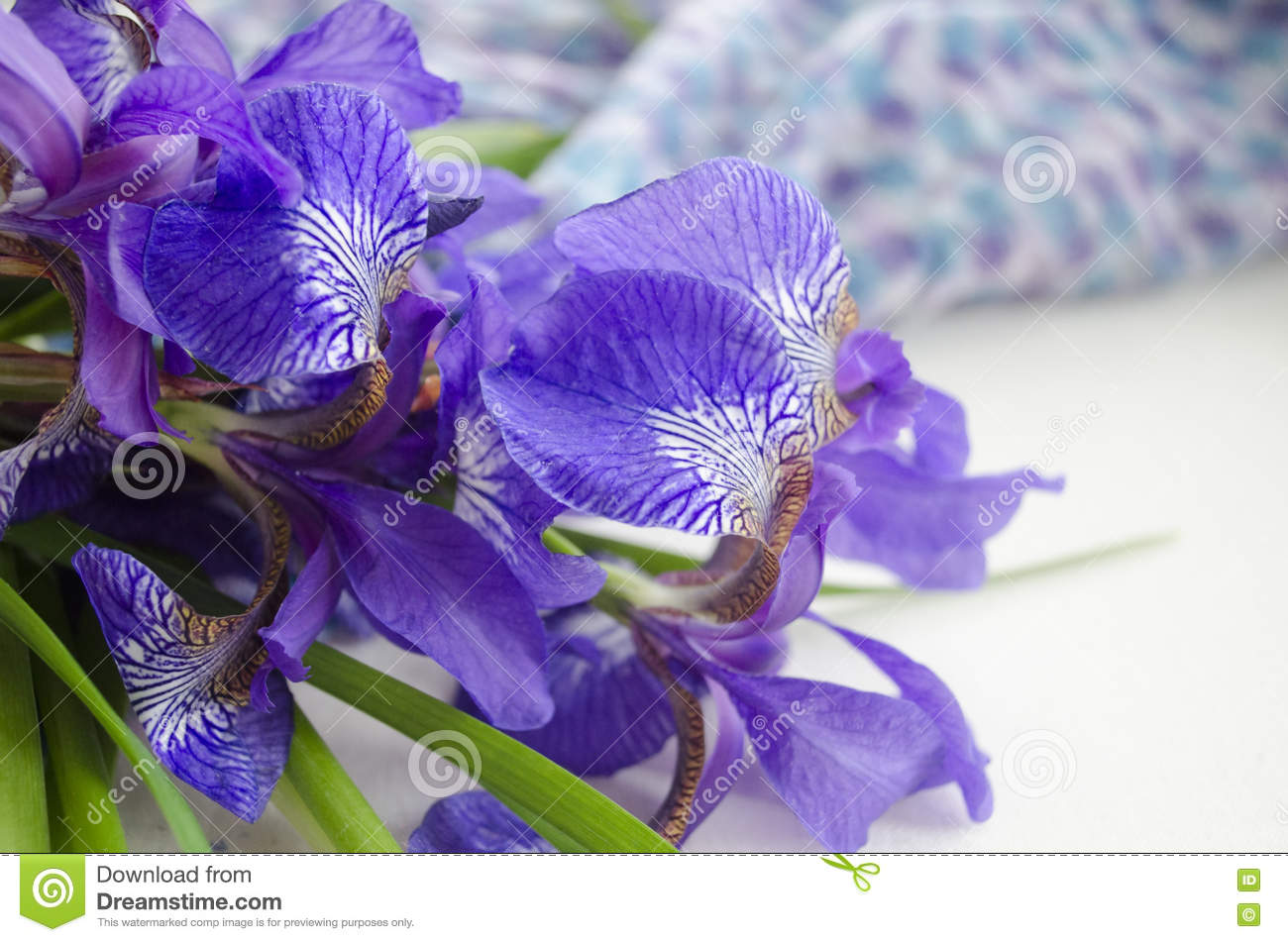 Iris flower bouquet of iris petals of a flower of an iris purple download iris flower bouquet of iris petals of a flower of an iris izmirmasajfo