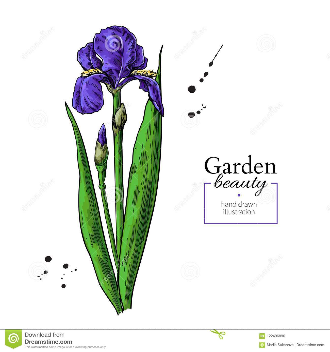 Iris Flower And Leaves Drawing Vector Hand Drawn Floral Object