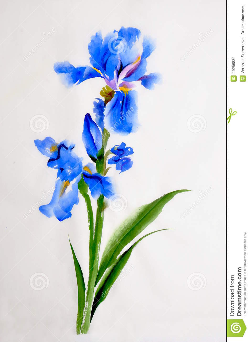 iris flower watercolor painting stock illustration illustration of
