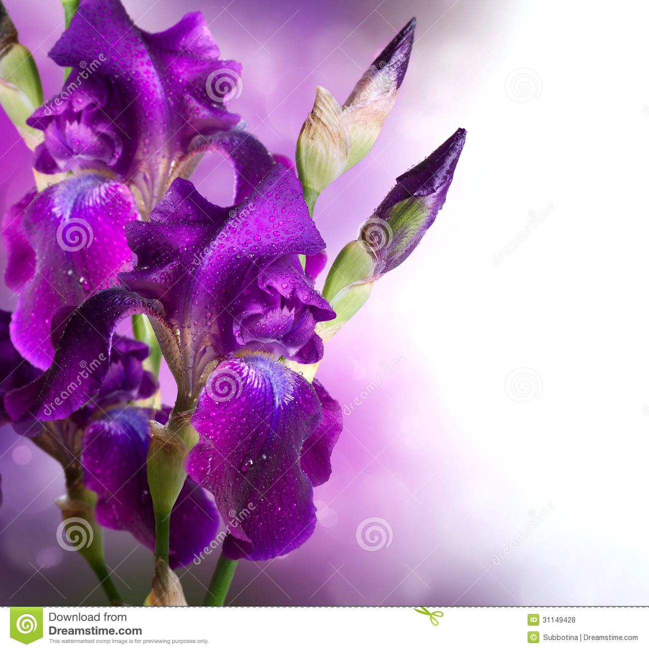 Iris Flowers Art Design Royalty Free Stock Photos - Image: 31149428