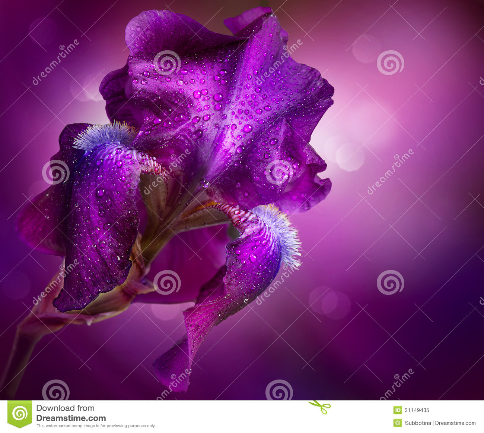 Iris Flowers Art Design