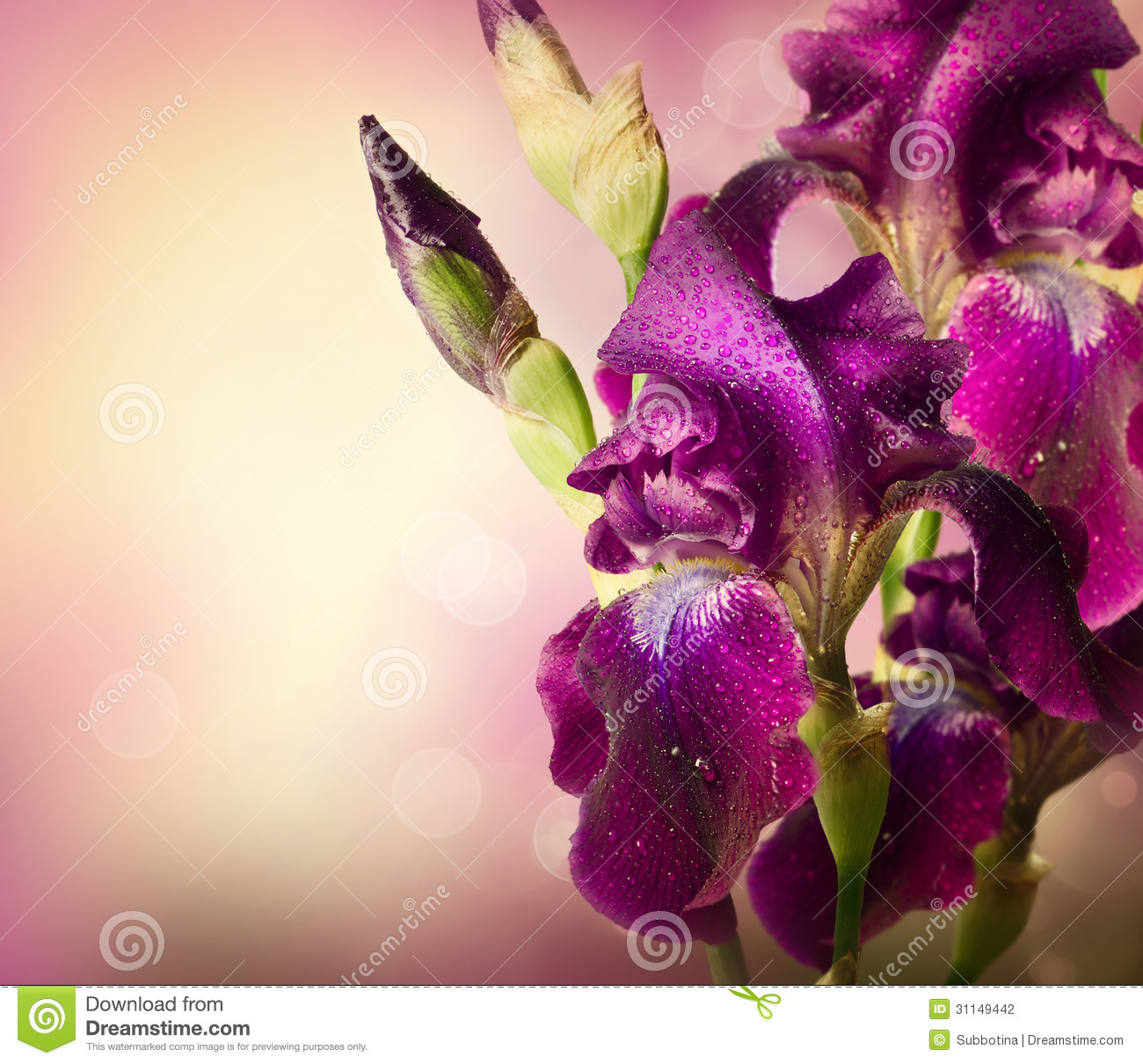 Iris Flowers Art Design Stock Photo Image Of Florist 31149442