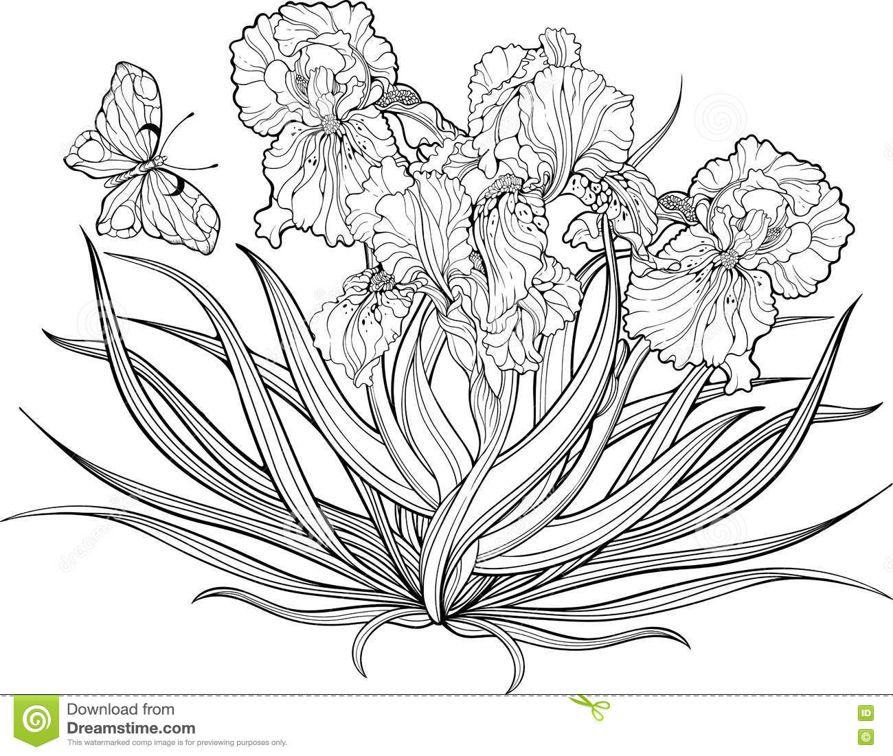 iris flowers and a butterfly coloring page stock vector image