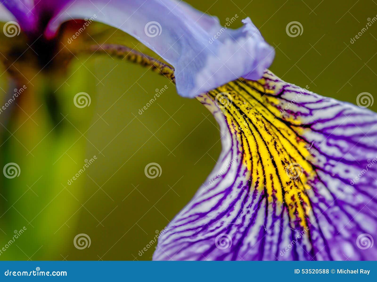 iris the greek goddess of the rainbow stock photo image 53520588