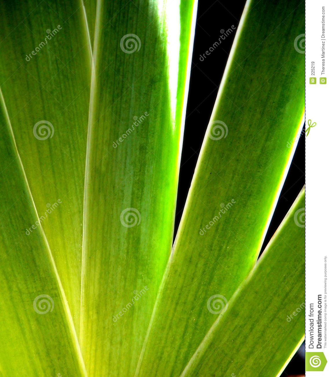 Download Iris Leaves stock image. Image of stalks, spread, flower - 225219