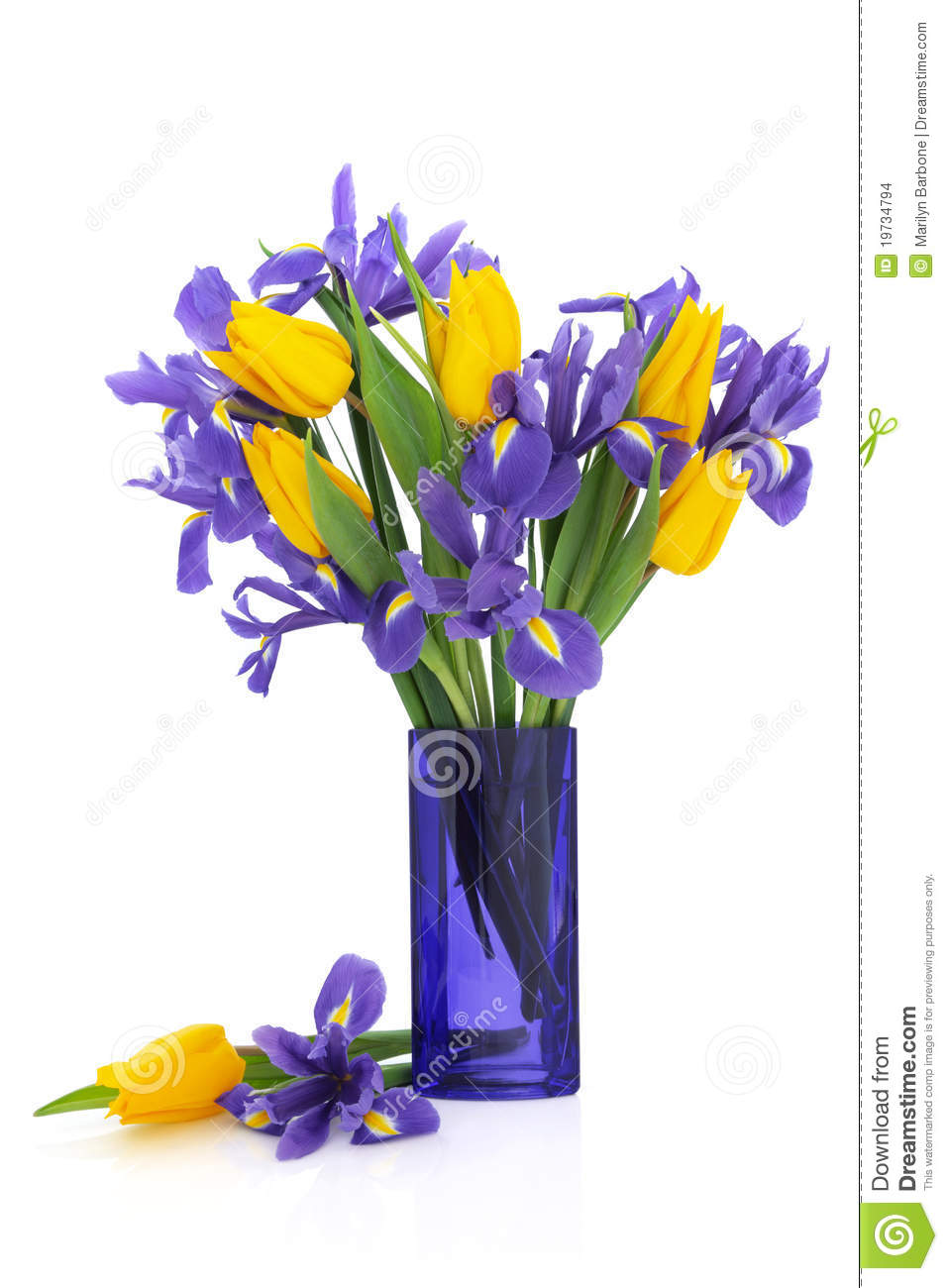 Iris And Tulip Flowers Stock Photo Image Of Glass Vase 19734794