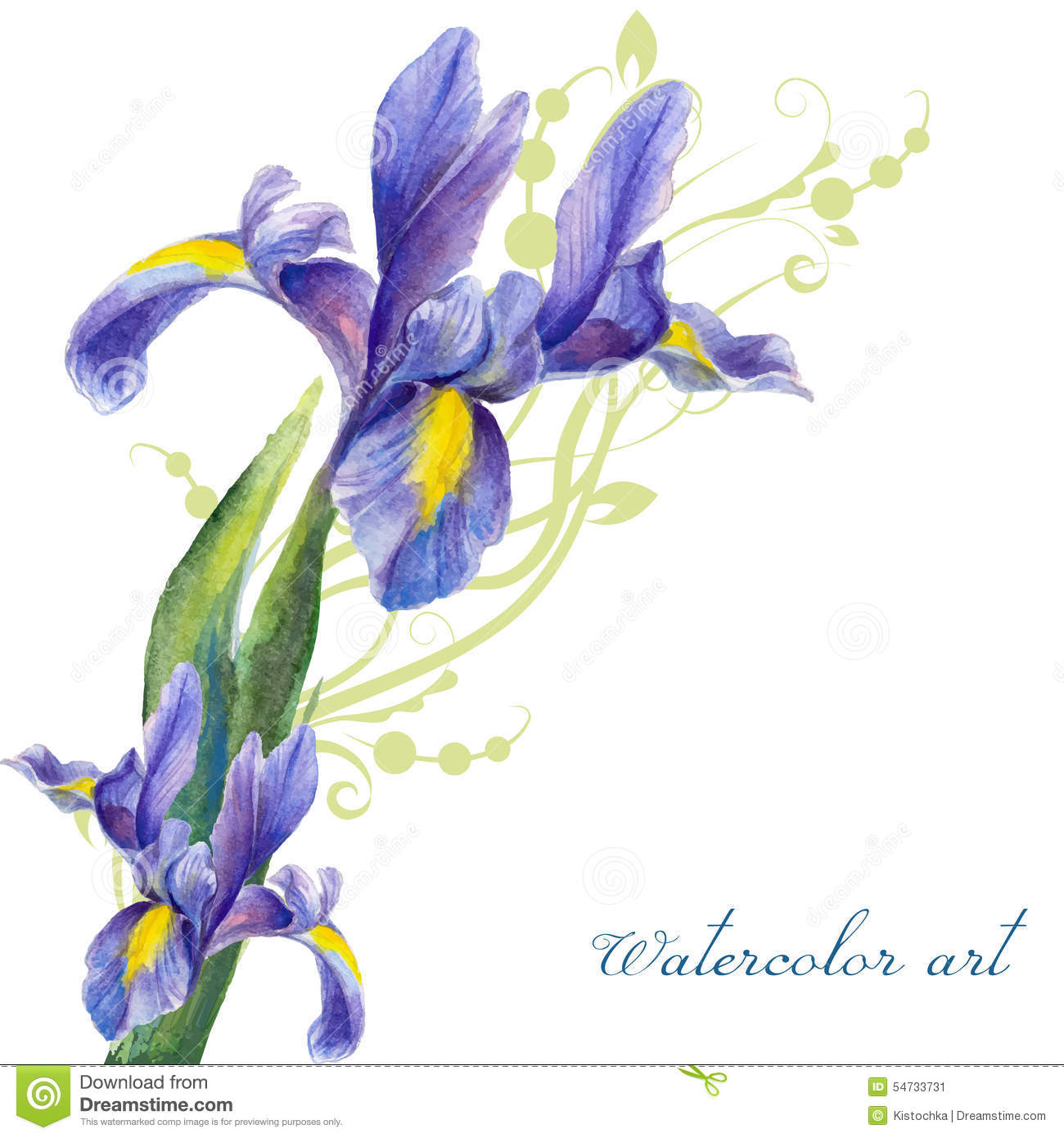 Irises Drawing By Watercolor Stock Vector Image 54733731